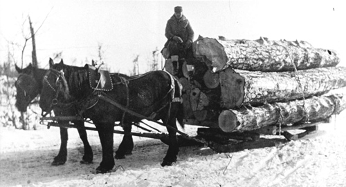 Timber Harvest History