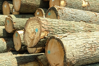 Piles of Saw Logs for Sale