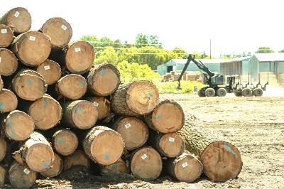 Veneer Logs For Sale Butt Logs For Wood Veneer Ash