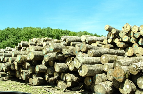 Stacked Timber For Sale