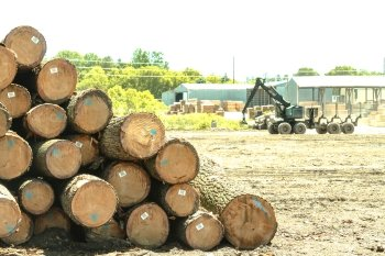 Pulpwood Suppliers in Wisconsin